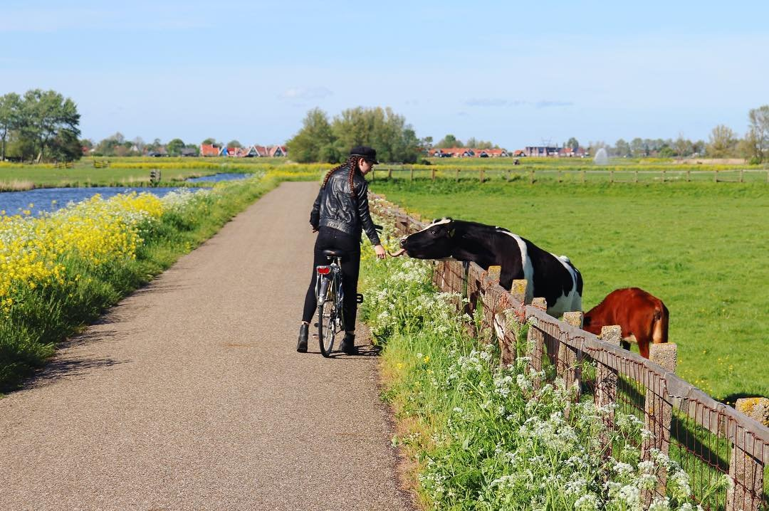 Living my best Dutch life 😻 Bikes, dirt roads through the farmlands, and cows with extremely long tongues 🇳🇱 #soblessed #cows #biking #cycling #nederlands #holland #dutch #travel #ruabroad #exchange #yoeo #family