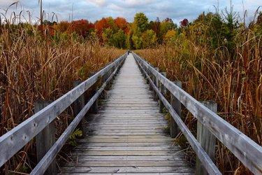 Fall is full of colors.  #Nikon #boardwalk #fall #fallcolors #photography #myottawa