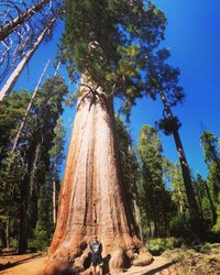Le sequoie giganti #mariposa #mariposagrove #sequoianationalpark #yosemite #california #unitedstates #honeymoon 🌙🍯