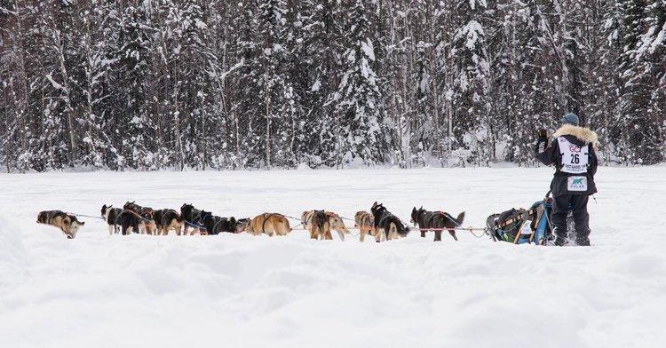 Annual Event: The Iditarod Sled Dog Race | Mat-Su CVB