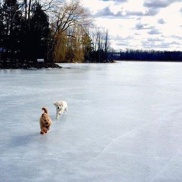 Winter is fun ppl #dogs #puppy #pets #nemo #furball #dogsofinstgram #nerd #nerdydog #dogsarethebest #winter #ice #lake #canada🇨🇦