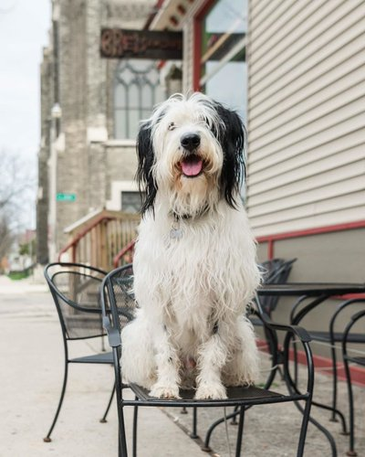 Visit Milwaukee Pet Friendly Milwaukee