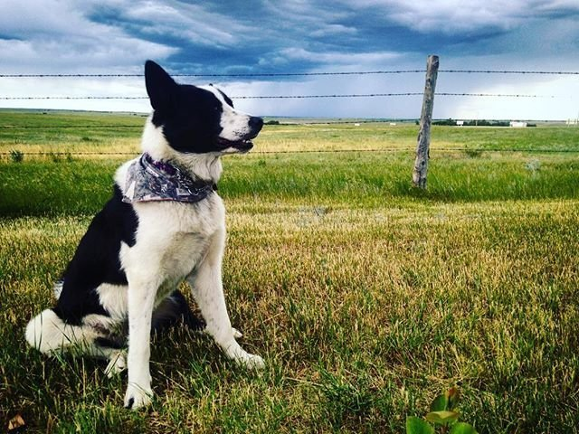 Pet Friendly Accommodations In The Cypress Hills Destination Area