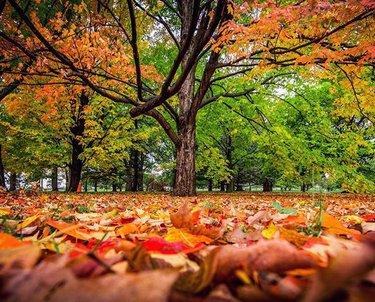 Autumn oranges and yellows blanketing the Dominion Arboretum this morning. #photooftheday #myottawa #pureontario #explorecanada #fallcolours