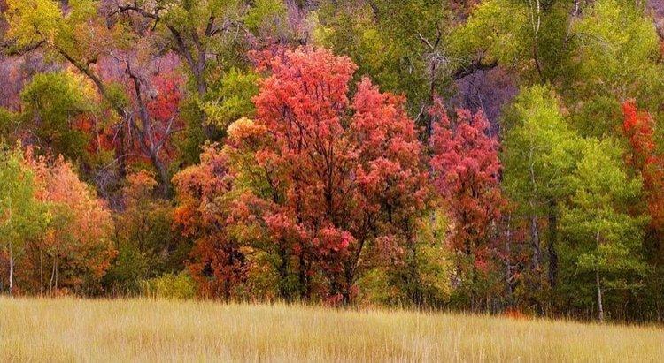 Free Things To Do Explore Utah Valley