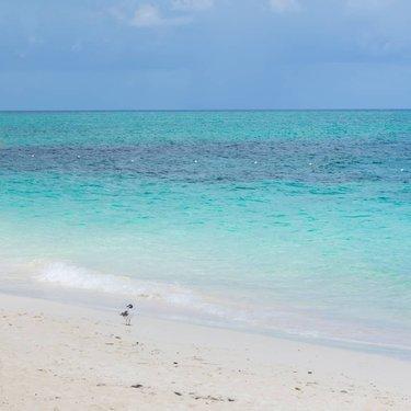 Official nassau paradise island bahamas vacation guide summer nassau bahamas beach summer ocean landscape fandeluxe Gallery