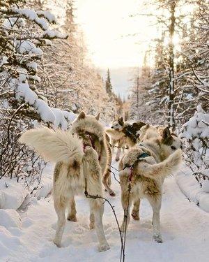 这些天在小径上有一些壮观的景点 - 甚至是白雪皑皑的猫头鹰💫