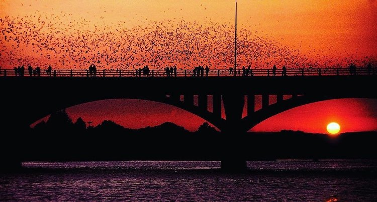 How to Experience the Bats in Austin, TX   Bat Watching 101
