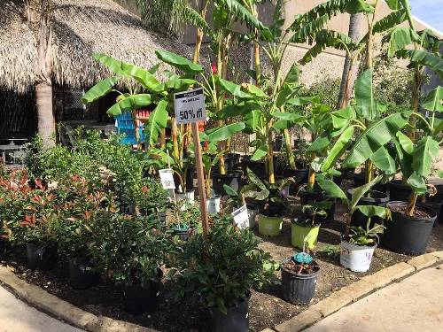 Surprise! 50% Off The The Below #trees! 😲❗