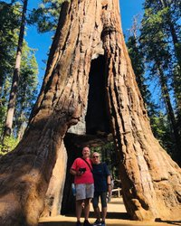 The California Tunnel Tree at Mariposa Grove. These giant sequoias look like they're from a different world. #mariposagrove#yosemite#2019roadtrip#california#doesthistreemakemybuttlookbig?