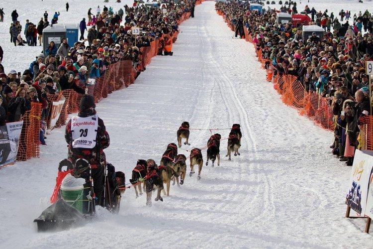 Annual Event: The Iditarod Sled Dog Race   Mat-Su CVB
