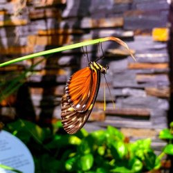 Need a vacation from your vacation? Come and relax in the colourful world of Butterflies in Flight! Immerse yourself in a tropical atmosphere, with flowering plants and butterflies that fly gracefully around you in the museum's solarium. Looking forward to seeing you here soon! . . .  #butterfly #butterflies #butterfliesinflight #butterfliesatthemuseum #wings #CanadianMuseumofNature #MuseumofNature #Museum #nature #Ottawa #MyOttawa #OttCity #OutaouaisFun #Canada #DiscoverON #exploreCanada