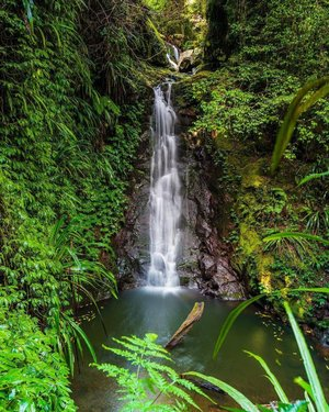 In need of some day-trip #inspo? You've come to the right place, in particular, the aptly named Green Mountains section of Lamington National Park. 💚 Taken along the Tooloona Creek Circuit, expect to see thick fauna, brushbox, antarctic beech while crossing through shady gorges as you hear the running streams of countless cascades. 💦 Sound inviting? Tell a friend who should go with you. 👣 #WeAreGoldCoast #thisisqueensland #SeeAustralia @queensland @qldparks @oreillysrainforestretreat 📸 @marissaknightphotography