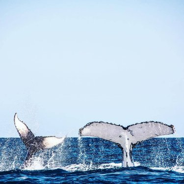 In case you were wondering, this is how a whale waves👋