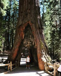 Throwback Thursday ➡️ back in 2013 , walking into Yosemite Park 🌲☀️#like4follow #like4likes #tbt #yosemite #mariposa #mariposagrove #usa #sequoianationalpark #sequoia