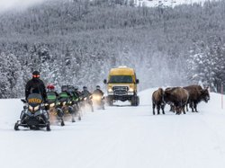Two weeks until the West Entrance to Yellowstone Opens for Winter Travel. Dec 15 - Mar 15 allows you to enjoy guided snowcoach and snowmobile trips into Yellowstone National Park. Learn more about guided tours from the link in our profile. . Photo courtesy of Yellowstone. . . . . #WestYellowstoneMTLove #HeartOfYellowstone #YellowstoneNationalPark #YellowstonePark #Yellowstone #WestYellowstoneMontana #WestYellowstoneMT #WestYellowstone #Montana #YNP #FindYourPark #nps #nationalpark #nationalparks #goparks #nationalparkgeek #nationalparkservice #encuentratuparque #americasbestidea #usinterior #nationalparklife #sharetheexperience #nationalparksusa #snowcoach #snowmobile #YellowstoneCountry #VisitMontana #VisitMT