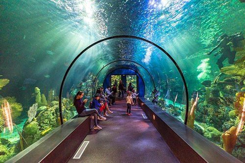 07e5ad314f1eb Aquarium Pyramid   Moody Gardens —  moodygardens  rainforest  aquarium .
