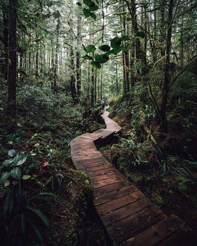 Forest hikes ?? Photo by @tomparkr Share your story: #roamtheplanet