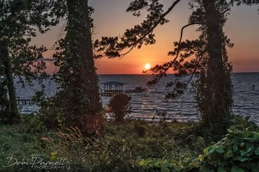 """Out on a Limb"" 