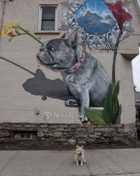 Good Saturday Morning! 🐶 😊  Did you see the @cbcottawa story this morning about this beautiful #ottawamural?  Mum could not believe anyone would complain to @cityofottawa and want it removed. So we decided to go and see this gorgeous art of a very loved #frenchbulldog created by #arpi.  If you are out for a #Thanksgiving drive, go check it out and be sure to get a photo of your dog and give artistic credit to Arpi. ❤️ 🐶 🎨 🎨 🎨 🎨 #otis #otisinottawa #myottawa #ottawadogs #dogtourism #ottawaspokespup #hintonburg #streetartdogs #exploreottawa #dogsthatexplore #outdoordoglife #613puppylove #canadiandog #photographersdog #saturdaymorning #instadog #jackrusselllife #explorecanada #beautifuldestinations #canineambassador #dogslife