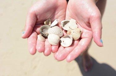 Seashells = Beach Treasure! 📷: visitalbeaches ————— #gulfcoast #gulflife #gulfofmexico #gulfshores #gulfshoresalabama #gulfshoresbeach #gulfshoreshotels #gulfstatepark #oceanlovers #onlyinalabama #orangebeach #orangebeachalabama #beachlovers #beachvacation #beachvibes #bestofalbeaches #visitalbeaches #vacationmode #thisisalabama #seashells #microtel #microtelbywyndham #microtelinn #microtelinngs #wyndham #wyndhamhotels #wyndhamrewards
