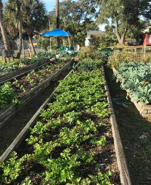 Beautiful Mornings At The Farm Stand! Come Get Some Veggies Before  Christmas! Weu0027