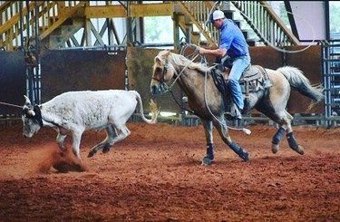 Cowboy Style #horses #horsesofinstagram #equestrian #teamroping #roping #ropinghorse #cow #cows #ranch #cowboystyle #cowboy #sweethomealabama #photography #actionshot
