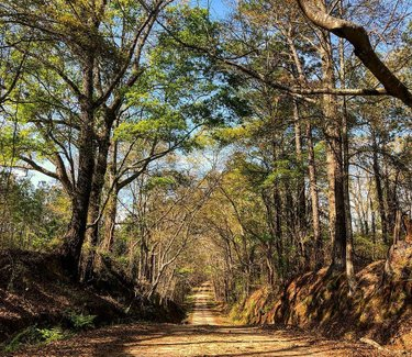 It's hard to beat a trip down an Alabama back road.  #sweethomealabama #alabama #rolltide #troy #backroads #reddirtroad #dirtroad #spring #cruising