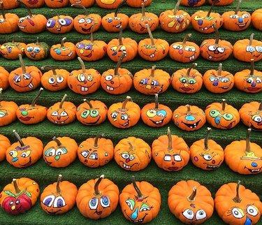 Ottawa is getting Halloween/ Fall season ready! 😊🎃🕸 #ottawa #canada #halloween #pupmkin #holiday #cute #faces