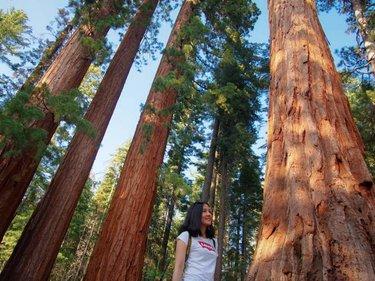ธรรมชาติและบรรยากาศดีดี 🌲🌿 🥰 ⠀⠀⠀⠀⠀⠀⠀⠀⠀ ⠀⠀⠀⠀⠀⠀⠀⠀⠀ ⠀⠀⠀⠀⠀⠀⠀⠀⠀ ⠀⠀⠀⠀⠀⠀⠀⠀⠀ #summer2019 #yosemitenationalpark #mariposa #bltraveling #yosemite